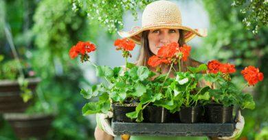 Mangler du inspiration til din have?